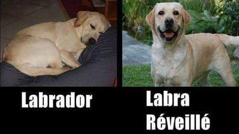 Les photos de chiens les plus drôles sur PhotoTouTou!